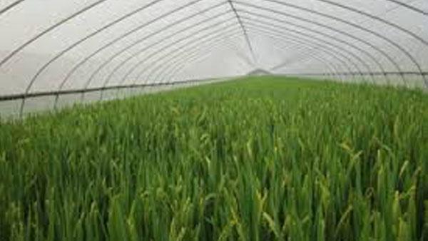 Agro-textiles