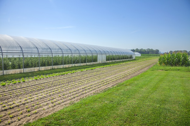 Greenhouse farming in India