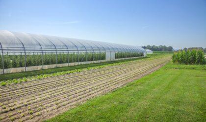 Greenhouse farming in India